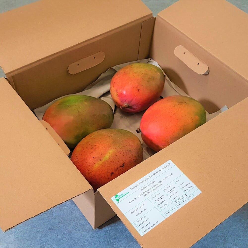 Mango Yulima 4 Set
